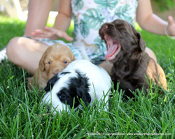 Yawns are contagious.