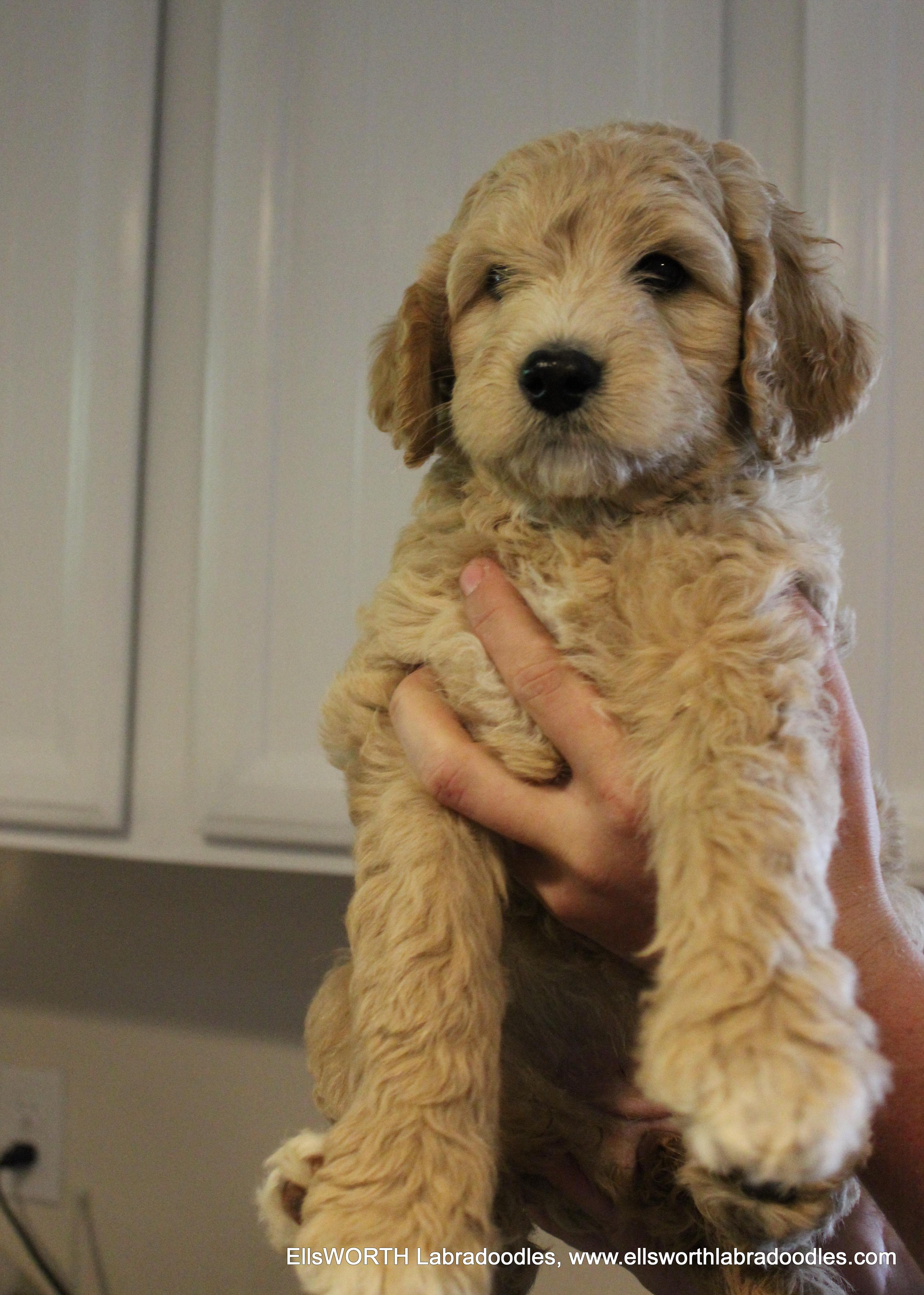 7 weeks old weighs 9.4 lbs