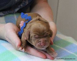 He was the 5th puppy born