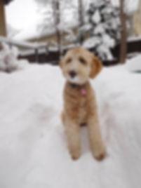 Greta in the snowl.jpg
