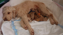 Holly and her sweet Lollypups