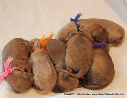they love a good puppy pile