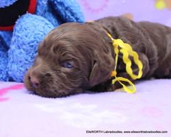 2 weeks old weighs 2.1