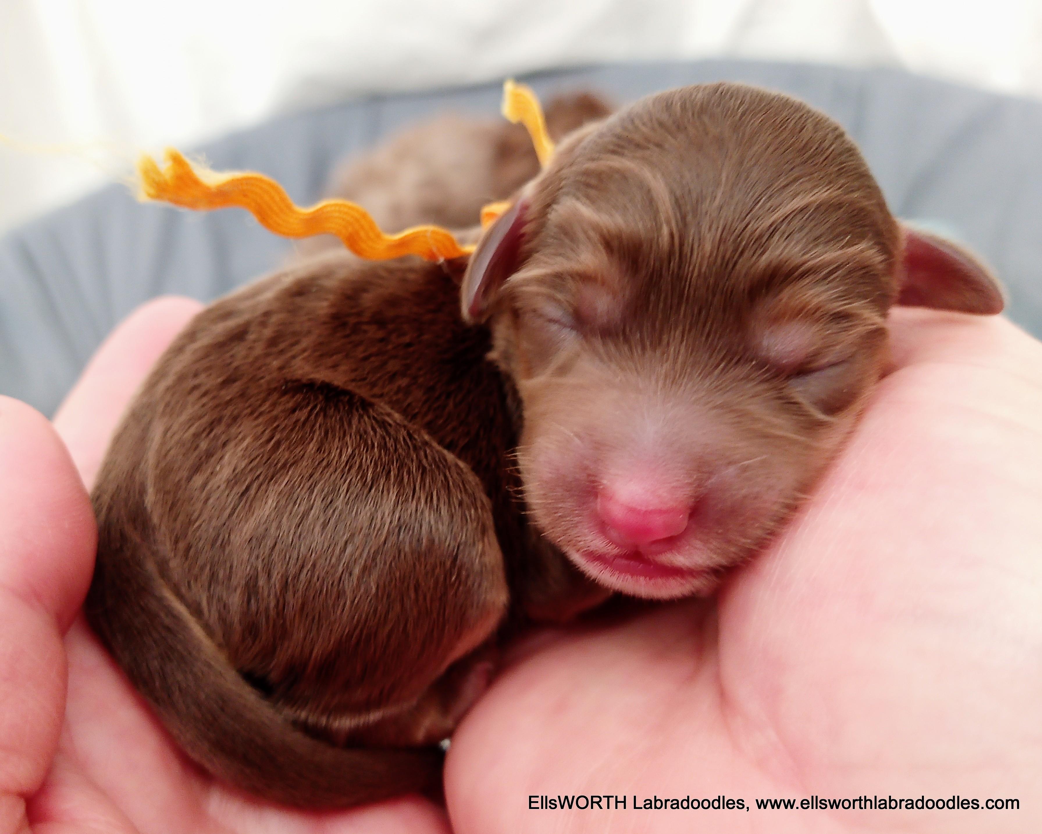 1st born  at 4:10 PM 8.1 oz