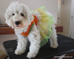 Halloween costumes are fun!