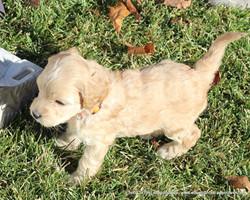 4 weeks old weighs 2.5 lbs