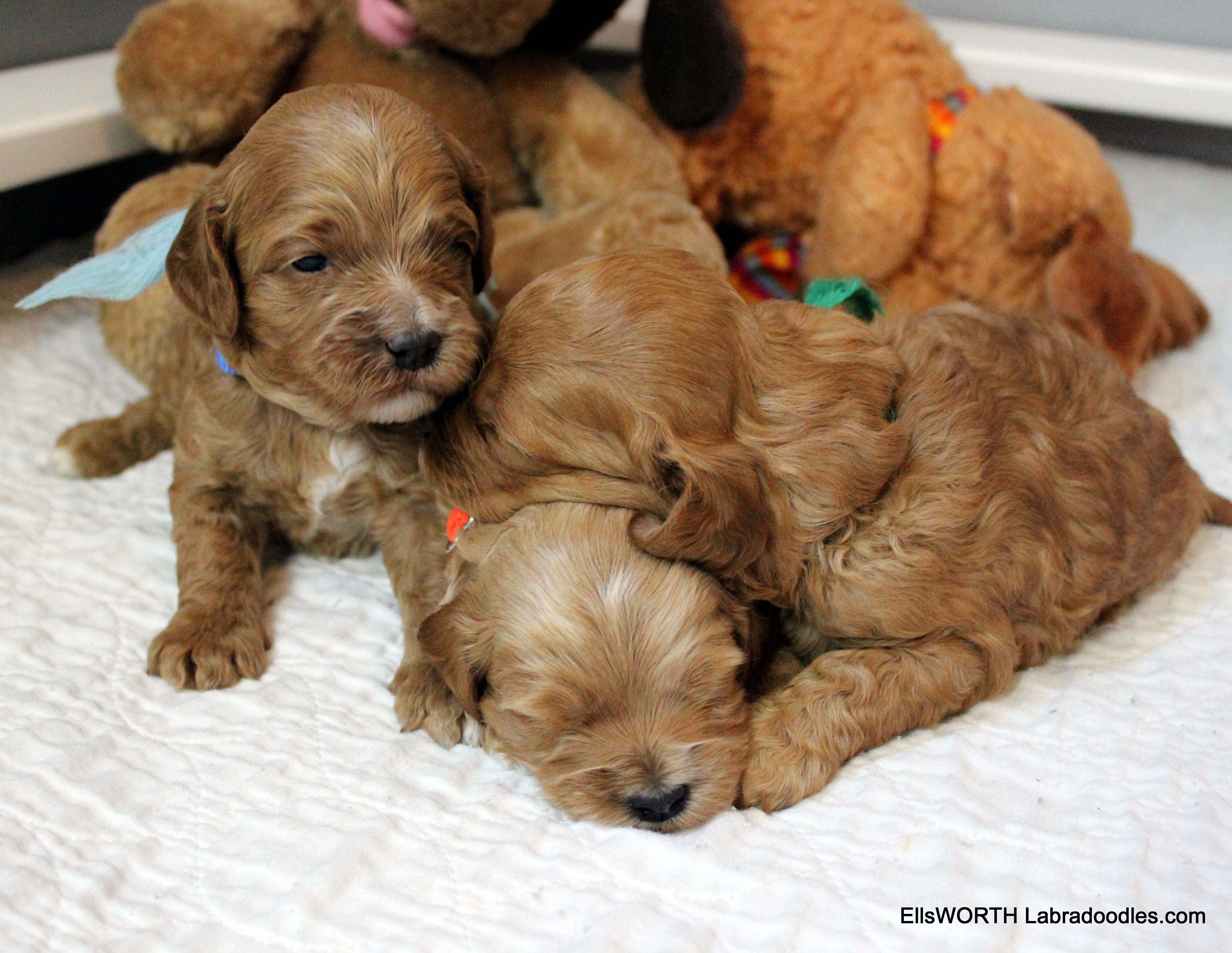 darling puppy pile