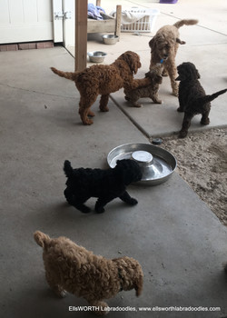 playing with the other litters