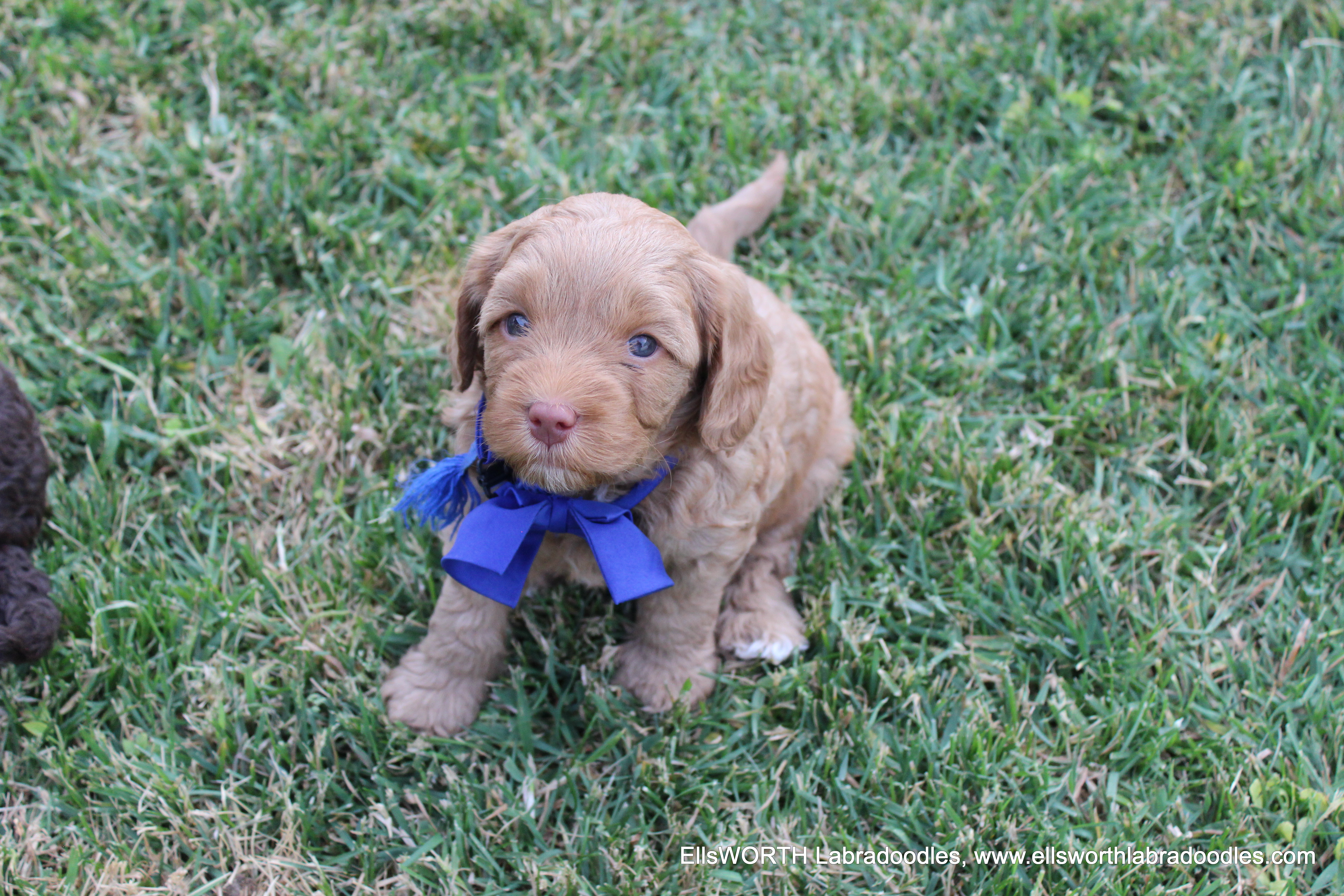 He gets a blue bow instead of a shirt