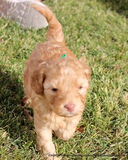4 weeks old weighs 2.14 lbs
