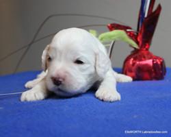 2 weeks old weighs 1.51 lbs,