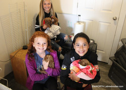 great helpers with puppies