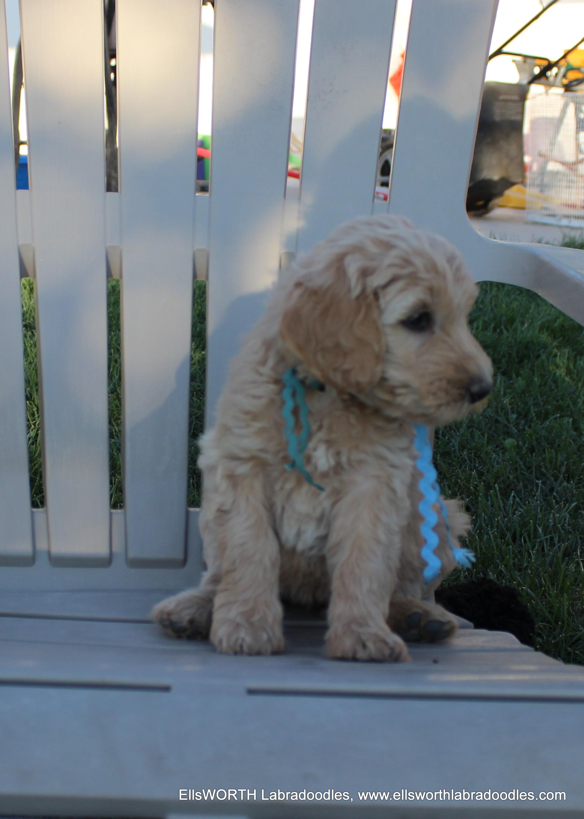 6 weeks old weighs 6.1 lbs