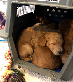 puppies like to sleep in a pile