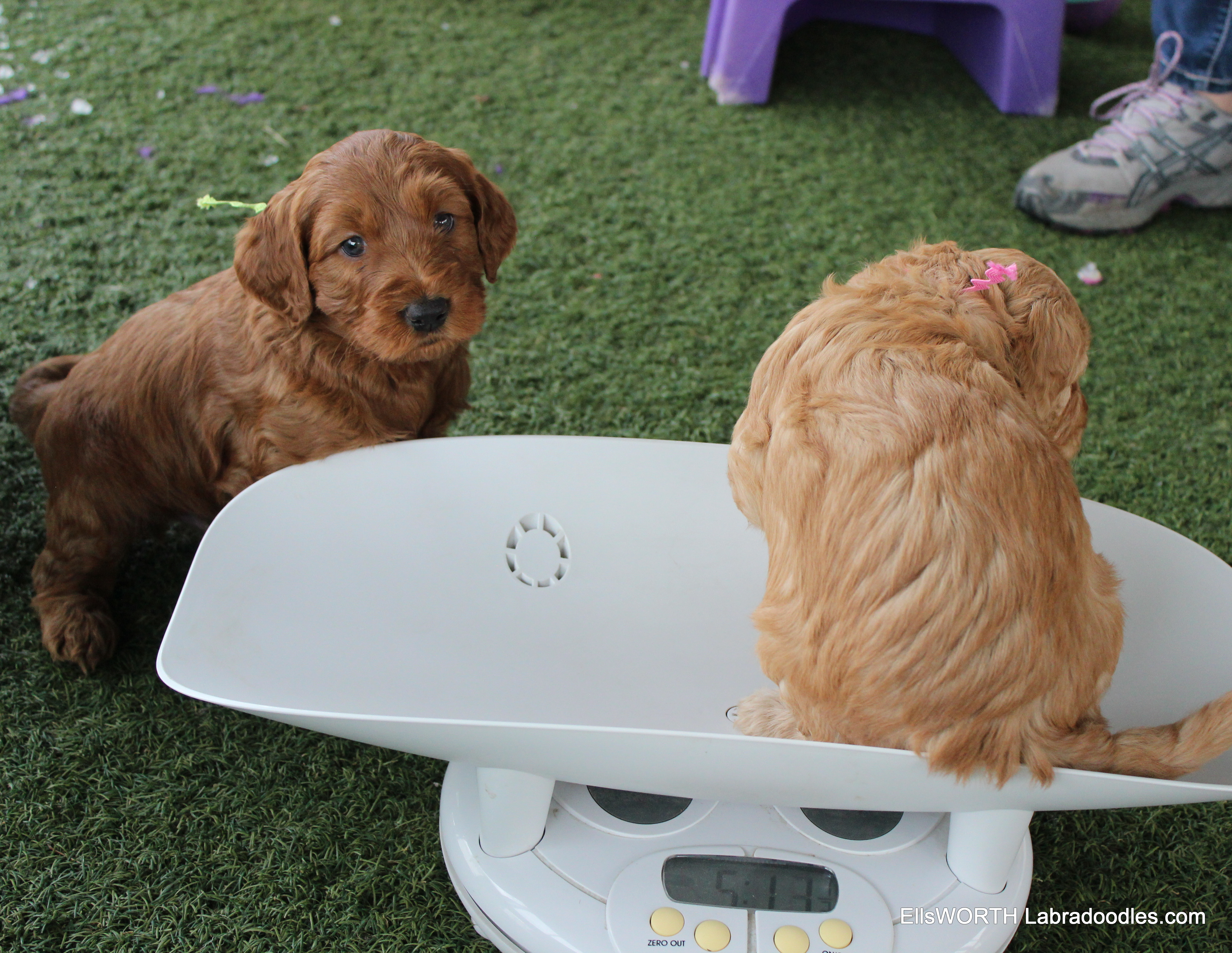 Watching his sister get weighed
