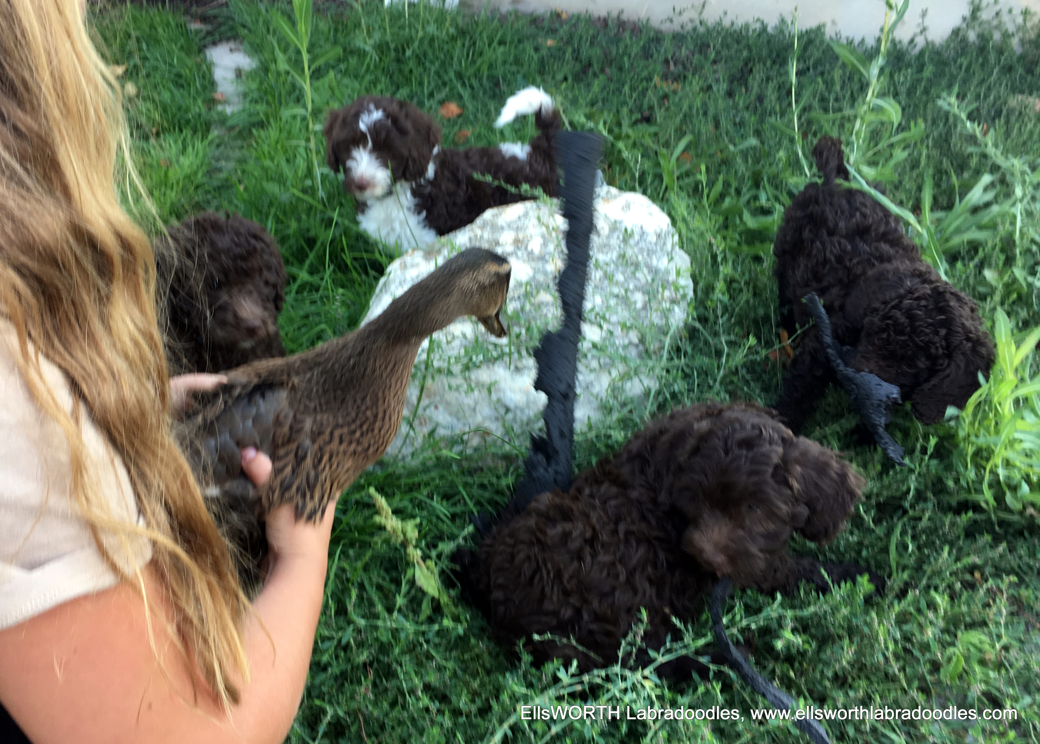 Emma holding the duck for the pups