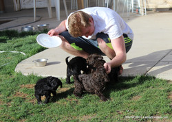 puppies and my son Max.
