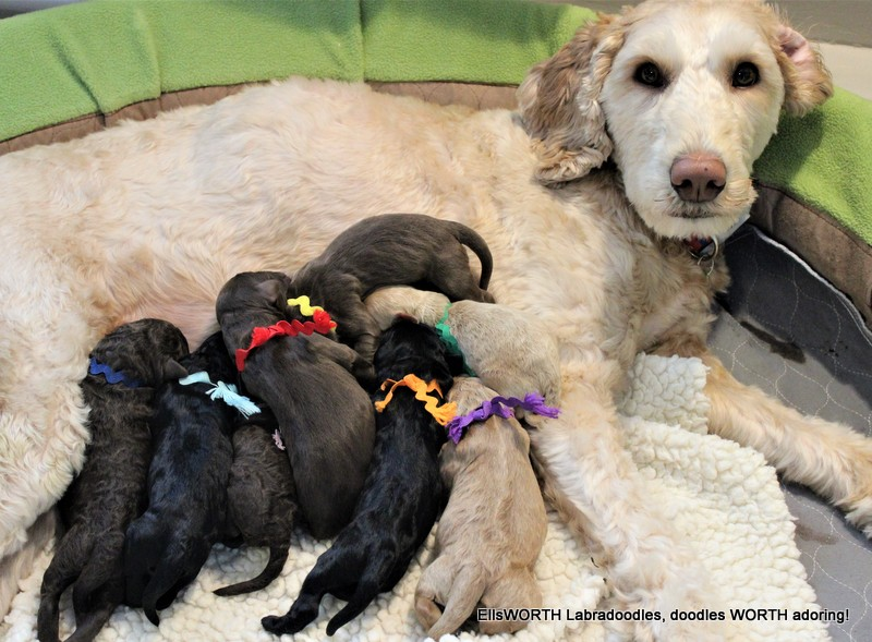 such a sweet Momma and her puppies