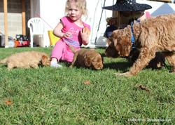 my grand daughter and the puppies