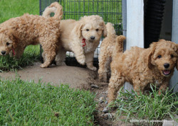 These pups love to play outside