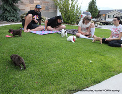 the Johnson's hanging out with the puppies