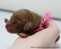 She was the littlest at 1 day old