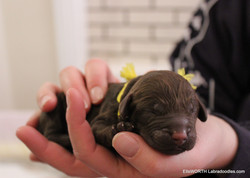 6th puppy born at 7:04 AM  weighs