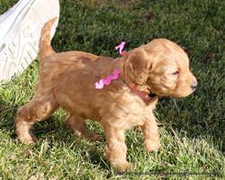 4 weeks old weighs 3.1 lbs