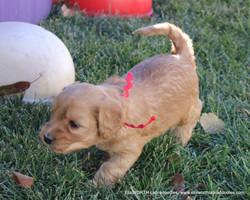 4 weeks old weighs 2.9 lbs
