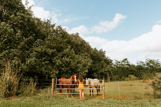 kauai.....i love horses!