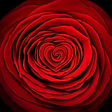 rose love.jpg