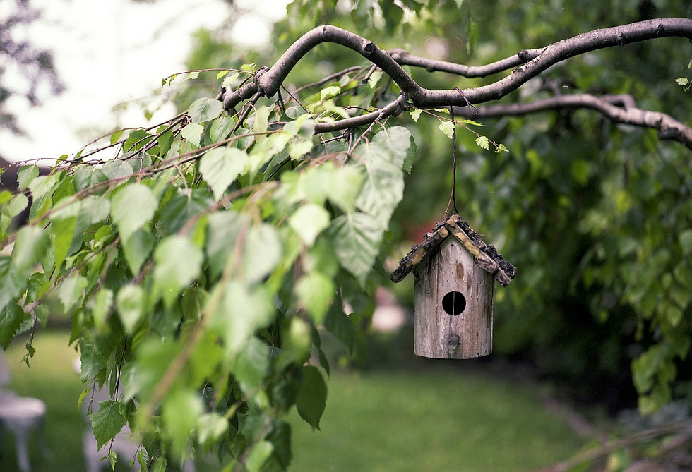 bird-feeder-2344414_1920  kopie.png