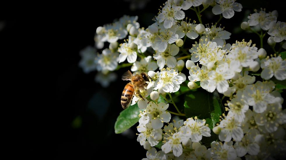 bees-3417951_1920 kopie.png