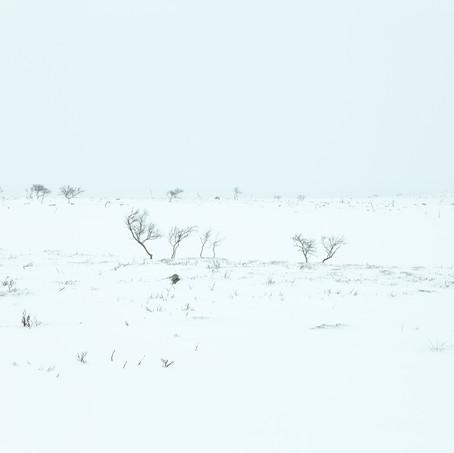 Desolaat, Nuorgam Tundra, Lapland, Finland