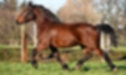 Grelot De Nesque, paarden leasen