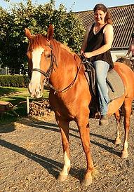 Paard kopen, Ellie.jpg