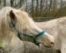 Mallow, paard leasen, stal Het Zoete Peerd