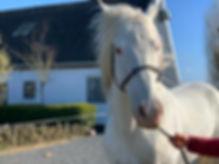 Mallow, paard huren, stal Het Zoete P