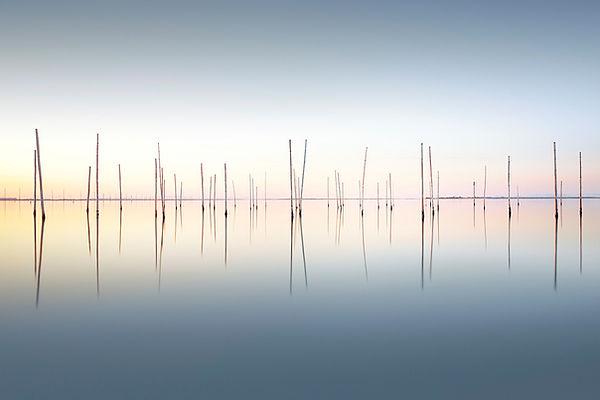 Last Light Michael Levin.jpg