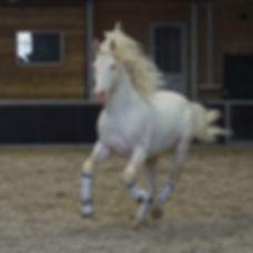 Mallow, paarden leasen