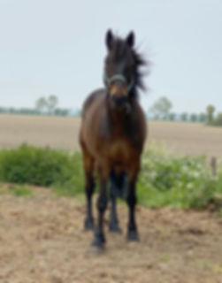 Madagascar, paarden leasen