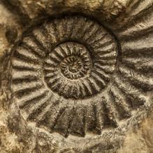 Ammonite, Jurassic Coast, England