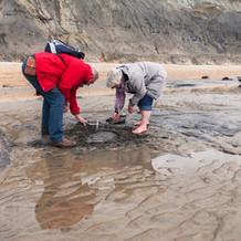 Fossil Hunting, Stonebarrow Cliffs, Jurassic Coast, England