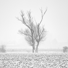 Dancers in the Mist, Groede, Zeeuws-Vlaanderen, Netherlands, 2019
