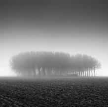 Dense Fog, Zeeuws-Vlaanderen, Netherlands