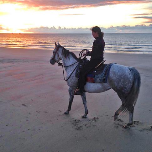 Paardrijden langs het strand in Zeeland