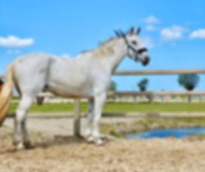 Calysta, paard en pony leasen