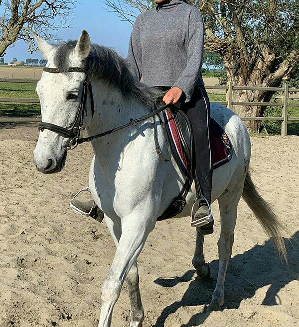 Paarden leasen, Het Zoete Peerd.jpg