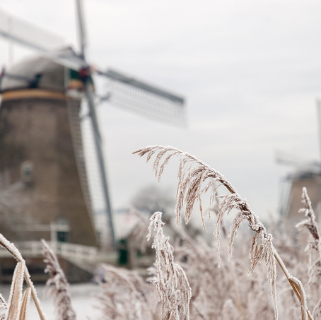 Frost and Reed, Kinderdijk, Zuid-Holland, The Netherlands