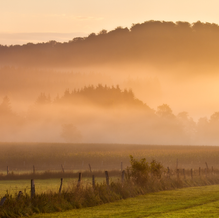 August Morning, Sauerland, Germany, 2011